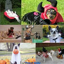 Halloween Costumes Boxer Dogs 100 Halloween Costume Ideas Dogs Fidose Reality