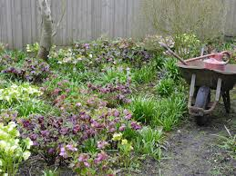 Flowers For Backyard by Flowers For Shade Gardens Gardening Ideas