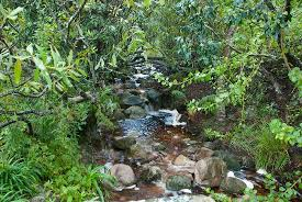 Kirstenbosch National Botanical Gardens by Little River Through The Botanical Gardens Picture Of