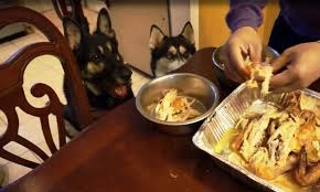 husky and german shepherd whole chicken for thanksgiving