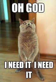 I Need Memes - oh god i need it i need it cat meme cat planet cat planet