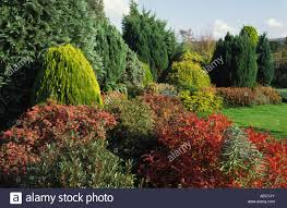 low maintenance broadlands dorset low maintenance conifers and shrubs in autumn