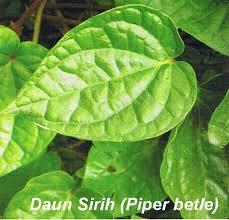 khasiat daun sirih