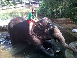home decorators elephant her bath on an elephant goa ponda tj s collection animals