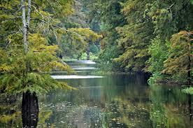 Mississippi forest images About the mississippi delta jpg