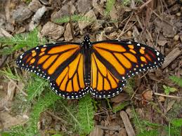 mother nature u0027s backyard a water wise garden butterfly gardens
