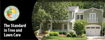 s tree service st louis tree removal st louis tree trimming