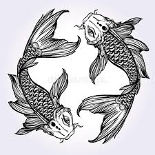 Black And Grey Koi Carp - koi carp fish illustration stock vector image 61108239