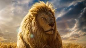 wallpapers tagged with king king hd wallpapers page 1