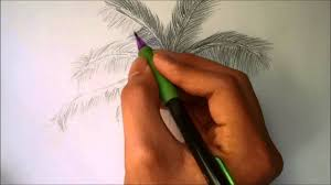 Pom Trees How To Draw A Palm Tree Youtube
