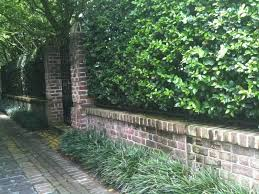 on the opposite end of the spectrum this brick wall and ligustrum