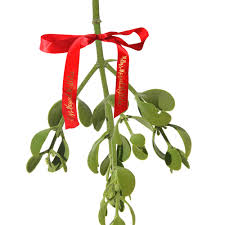 where to buy mistletoe s magical mistletoe a christmas tradition