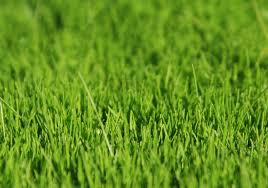 Astro Turf Artificial Grass Astro Turf Artificial Turf Synthetic Grass Tlc