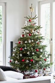best 25 noble fir christmas tree ideas on pinterest simple