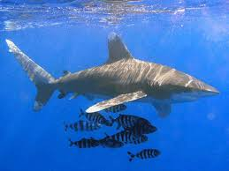 shark dies in backyard pool during kmart commercial shoot