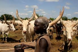 south sudan where livestock outnumbers people and the environment
