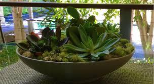 diy succulent garden trace style create live