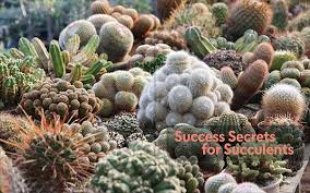 Seeking Cactus Cast Orchestrating The Ideal Site For Succulents Timber Press