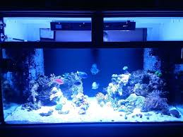 led reef lighting reviews aquarium reef lighting led reef aquarium lighting reviews crypdist