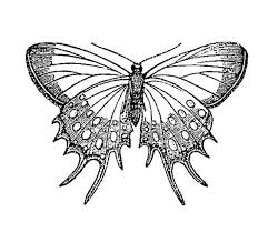 and white vintage butterfly clipart