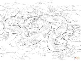 spectacular sea snake coloring pages with snake coloring page