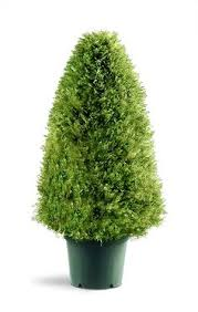 national tree 22 inch mini boxwood plant in 18 inch diameter