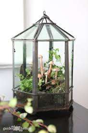 have an overgrown or dying terrarium get creative with a