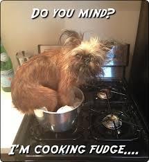 Dog Cooking Meme - candy making dog meme anonamos3021
