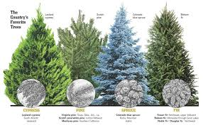 live christmas trees types of live christmas trees neologic co with regard to kinds of
