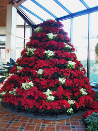 Flower Decorations For Christmas Tree by Advent U2013the Christmas Trees Karen U0027s Chatt