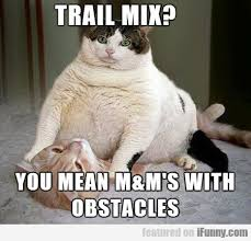 Fat Cat Meme - fat cat and candy fight catvirals com funny cat pics videos