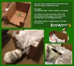 rooting box diy bunny rabbit toys that are cheap and easy to