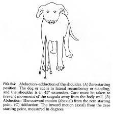 Internal Dog Anatomy B2 Jpg