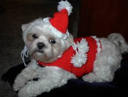 giget u0027s dog santa sweater and hat free crochet pattern courtesy of