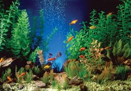 Plants For Aquascaping The Wonderful World Of Plastic Plants Not Just For Beginners