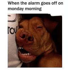 Monday Morning Meme - when the alarm goes off on monday morning funny meme on sizzle