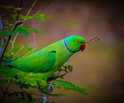 parrots in paradise kealakekua hawaii exotic bird 156 best pinteres images on pinterest beautiful birds budgies and