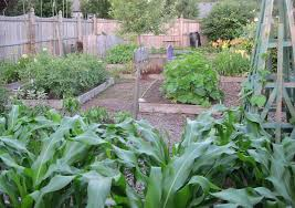 small vegetable garden plans and designs the garden inspirations