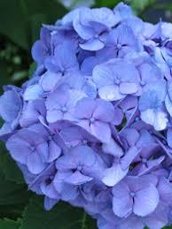 Bulk Flowers Online Wholesale Flowers Bulk Flowers Wholesale Flowers Online
