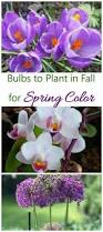 bulbs to plant in fall get spring blooming bulbs in before winter