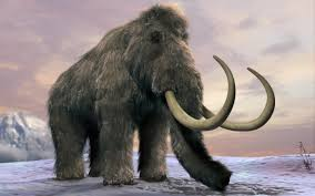 woolly mammoth extinction
