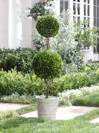 Front Porch Topiary 13 Topiary Planter Ideas That Will Have You Priming Your Shears