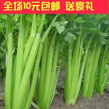 china hanging vegetable garden china hanging vegetable garden