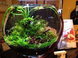 Aquascape Construction Epoxy 351 Best Aquarium Images On Pinterest Aquarium Ideas Fish Tanks