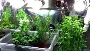 grow light indoor garden plant light walmart excellent fluorescent plant light fluorescent