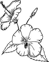 cartoon flowers china rose coloring page wecoloringpage
