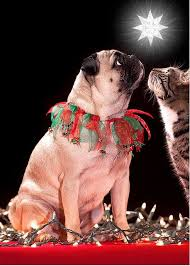 115 best pug christmas cards images on pinterest christmas cards