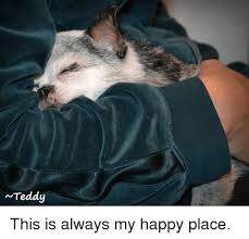Happy Place Meme - teddy this is always my happy place meme on me me