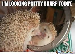 Hedgehog Meme - sharp hedgehog by kurtwylde meme center