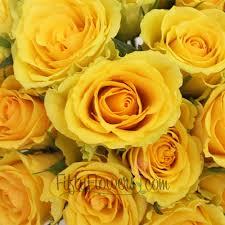 bulk roses yellow bulk roses